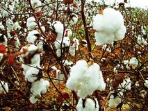 Cotton Christmas Royalty Free Stock Photography