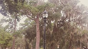 Southern Streetlamp. A vintage streetlamp stands tall, surrounded by pine trees and trees with Spanish moss Royalty Free Stock Photography