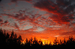 Southern sunset, sunrise. Sun setting slowing in the west with red clouds and trees below Royalty Free Stock Photo