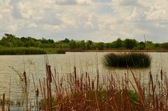 Southern Texas Lake, Rio Grande Valley. A lake in the Lower Rio Grande Valley of southern Texas near Santa Ana wildlife refuge stock photo