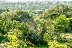 Southern texas landscapes of nature at sunset near willow city l Stock Images