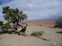 Southern Utah landscape. Photo of the arid Southern Utah landscape stock photo
