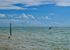Southernmost point of Florida and the United States in the Atlantic Ocean with person swimming and water birds Royalty Free Stock Image