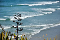 Southland coastline. New Zealand Flax and ocean, near Dunedin stock image