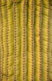 Southwest background of a saguaro cactus Stock Photos