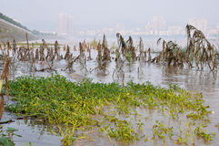2013 Southwest China floods Royalty Free Stock Image