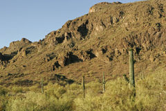 Southwest Desert Background. Southwest USA Desert Landscape with Saguaro Cactus Royalty Free Stock Photos