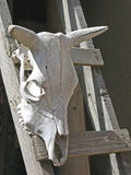 Southwest Icon. Steer skull, complete with horns - very southwest royalty free stock photos