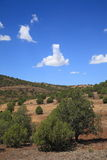 Southwest Landscape Royalty Free Stock Photos