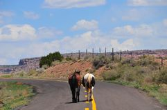 Southwest Landscape with Horses. Grazing along the roadside. Chestnut colored horse with black mane and tail and pinto pony companion. Native American Royalty Free Stock Images