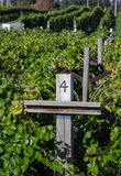Southwest michigan winery vineyard Stock Image