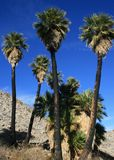 Southwest Palm Grove Royalty Free Stock Photos
