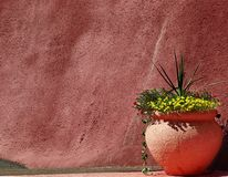 Southwestern Garden Stock Images