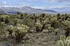 Southwestern USA desert scene Royalty Free Stock Images