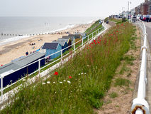 SOUTHWOLD, SUFFOLK/UK - 6月11日:在B附近的英国野花 免版税库存照片