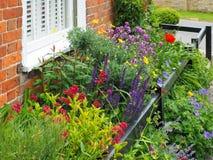 SOUTHWOLD SUFFOLK/UK - JUNI 12: Härliga blommor i en trädgård Arkivbild
