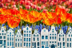 Souvenir canal houses with blooming orange tulips Stock Images
