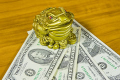 souvenir is a frog and dollars Royalty Free Stock Images