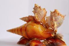 Souvenir made with sea shells. A souvenir made with sea shells stock photography