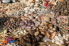 Souvenir Seashells in Bodrum Stock Images