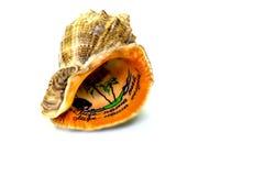 Souvenir shell Royalty Free Stock Photography