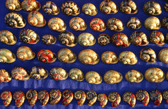 Shells from Luang Prabang Laos Royalty Free Stock Images