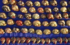 Shells from Luang Prabang Laos Royalty Free Stock Images