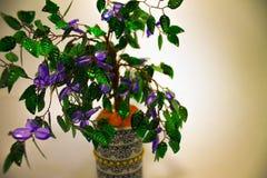 Souvenirträd som kommer med bra lycka fotografering för bildbyråer