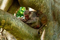 Sova apor på trädet Arkivfoton
