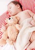 Sova behandla som ett barn gulliga små på rött, och vita band kudde Arkivbild