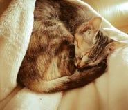 Sova den gulliga katten arkivbild