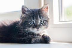 Sova den lilla kattungen på fönstret arkivfoto