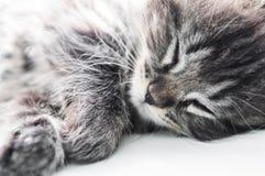 Sova den lilla kattungen på fönstret arkivbild