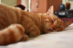 Sova den orange katten på en säng royaltyfri fotografi