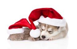 sova den skotska kattungen och den Siberian skrovliga valpen med den santa hatten isolerat arkivbild