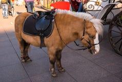 Sova den trötta ponnyn på väntande på kunder och passagerare för stengata Arkivbilder