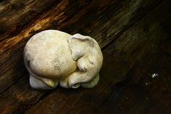 Sova elefanten Arkivbild