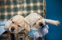 sova för hund Royaltyfria Bilder