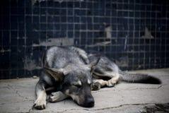 sova för hund arkivbilder