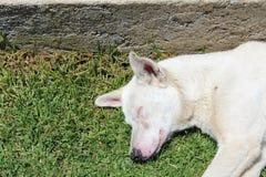 sova för hund Royaltyfri Foto