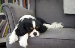 sova för hund Arkivfoton