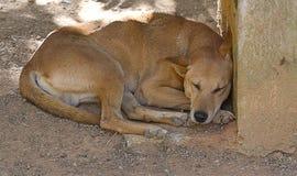 sova för hund Arkivbild