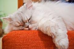 sova för katt Arkivbilder
