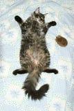 sova för katt Royaltyfri Bild