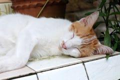 sova för katter Arkivbilder