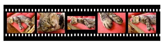 sova för kattfilmstrip royaltyfri foto