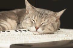 sova för katttangentbord royaltyfria bilder