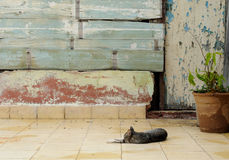 sova för kattträdgård Arkivbild