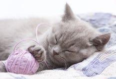 sova för kattunge Arkivfoto
