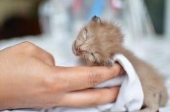 sova för kattunge för katt gulligt Royaltyfria Bilder